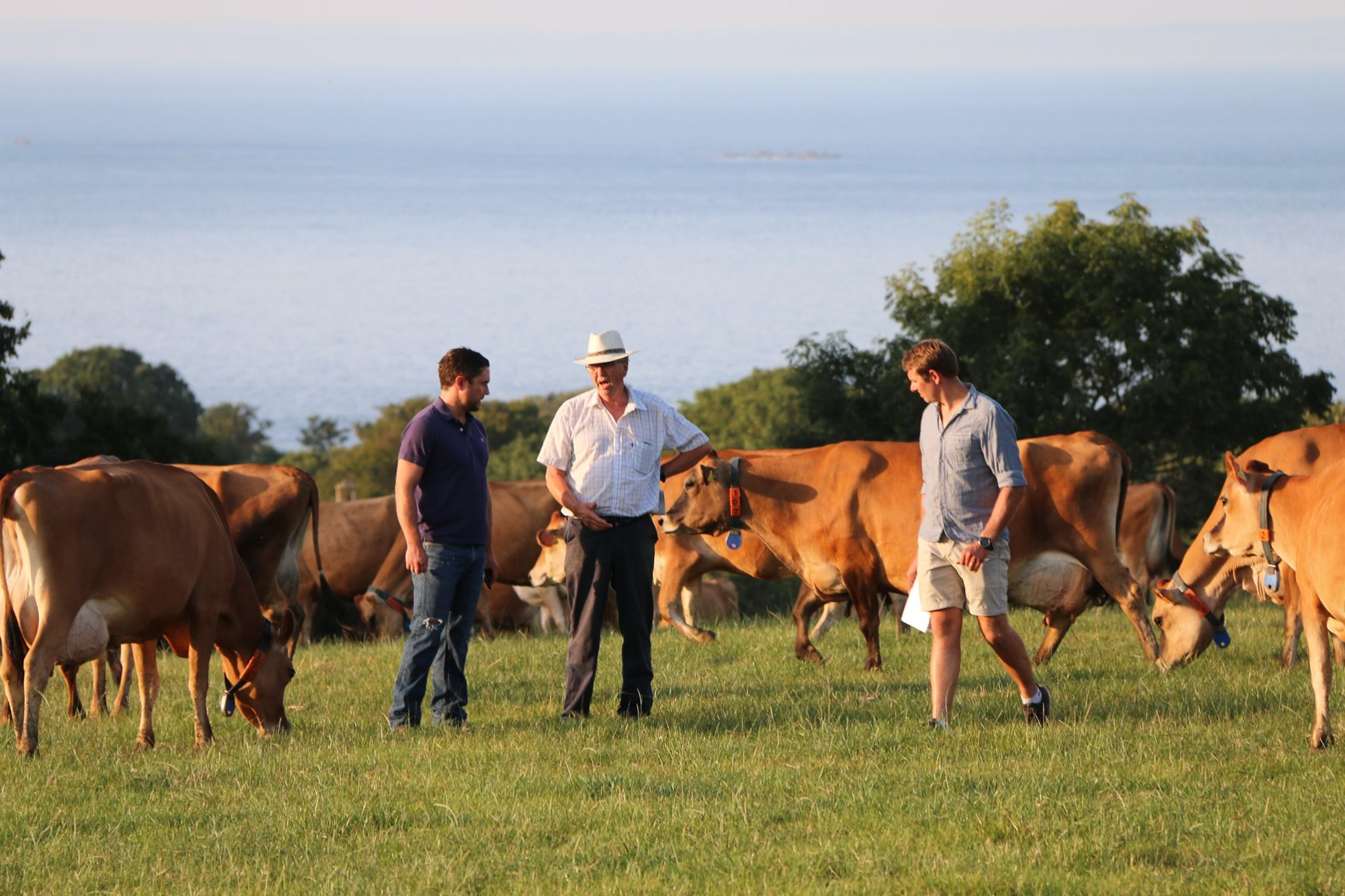 Profile photo of Jersey Dairy farmers meet weekly in the summer months to exchange farming tips and study the different Jersey herds around the Island.